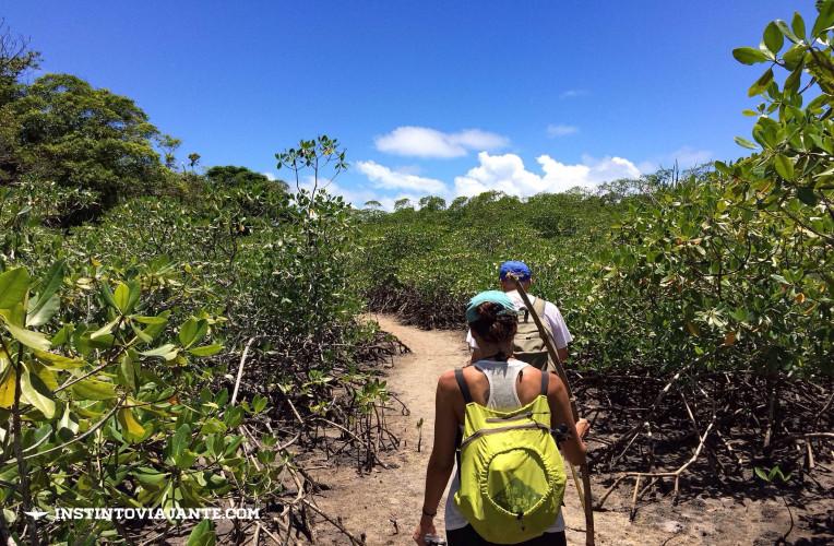 trilha usina jeribucaçu bahia