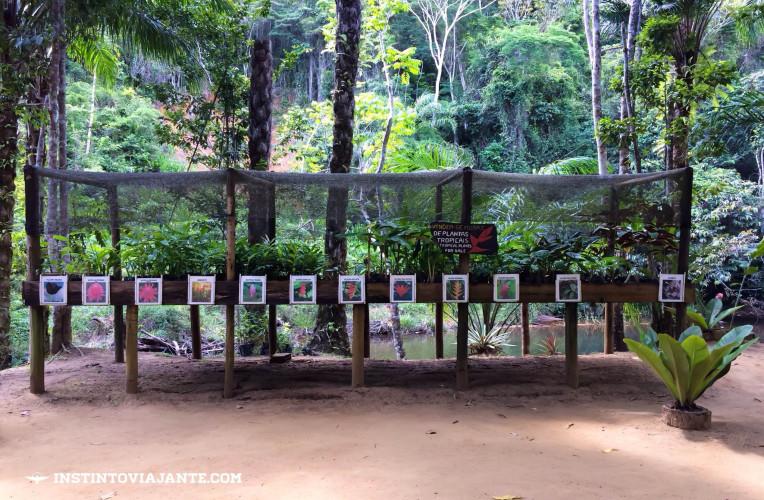 Orquídeas expostas para venda na cachoeira do Tijuípe, em Serra grande, próxima de Itacaré.