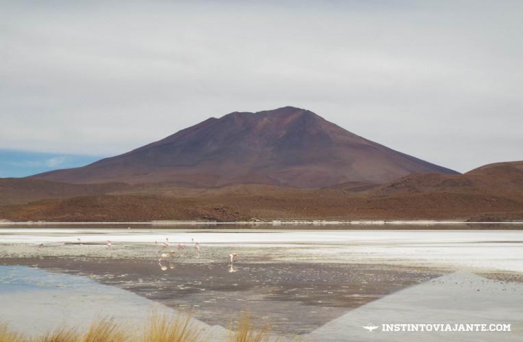 Flamingos na LagunaChiarkota, Uyuni, Bolívia |Dia 2 no Deserto de Sal