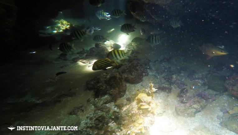 mergulho taipu de fora peninsula de marau dicas de viagem