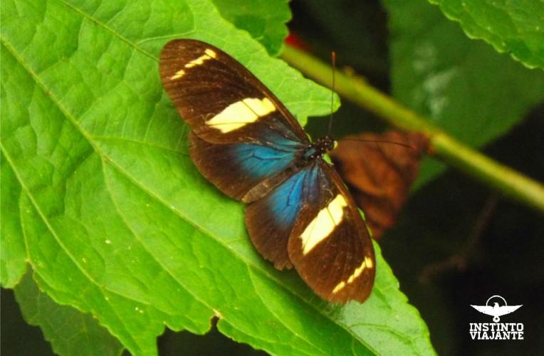 borboleta caminho saco bravo