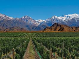 vinicolas em mendoza curso de vinhos