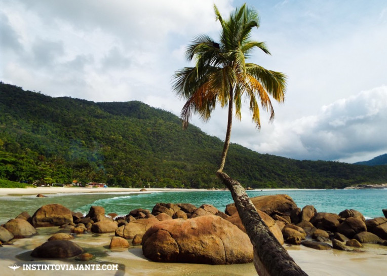 Coqueiro deitado e a praia de Aventureiro, Ilha Grande/RJ