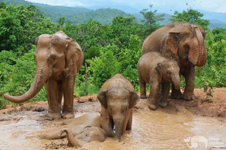 Reserva de elefantes livres na Tailandia