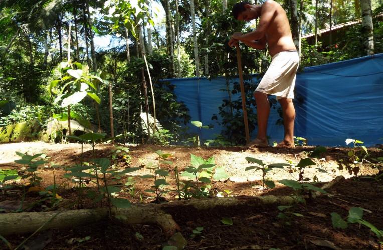 Capinando e plantando pela primeira vez na vida