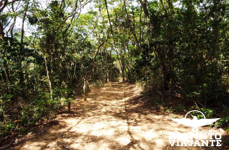 Caminho indo para Japariz, Ilha Grande/RJ