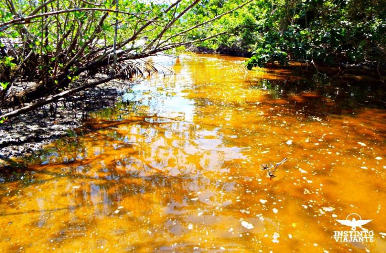 Final do mangue entre as Praias de Sul e Leste, Ilha Grande/RJ