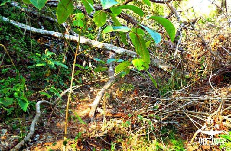 Trecho de trilha fechado devido aos temporais, na Trilha T16 (Dois Rios – Parnaioca)