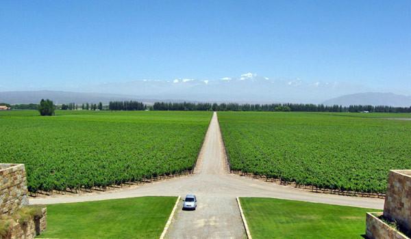 Vinhedos da Bodega Catena Zapata, em Mendoza, Argentina. Foto: constancezahn.com